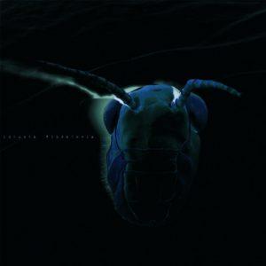 locusta-migratoria