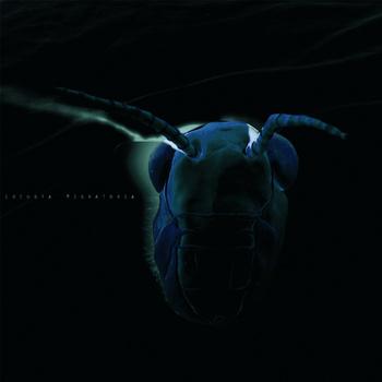 LOCUSTA MIGRATORIA – Locusta Migratoria